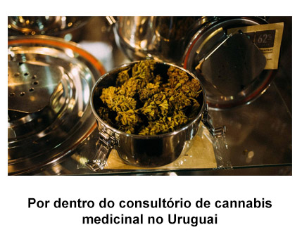 por dentro do consultorio de cannabis